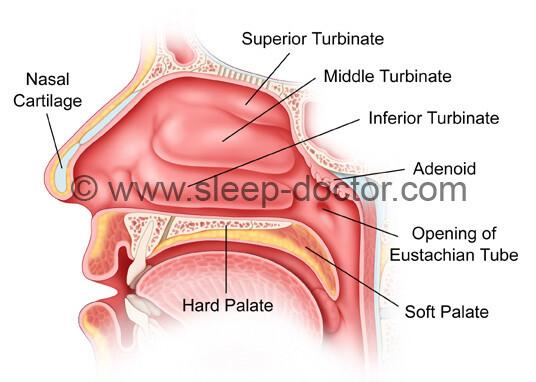 nasal procedures 02 - Turbinate Surgery